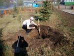 Посадили дерево